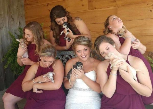bridesmaids walked down the aisle carrying puppies
