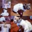 dog wears wedding dress